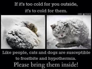 too cold for animals
